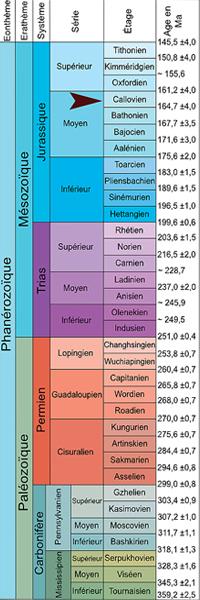 les ammonites sur l'échelle stratigraphique