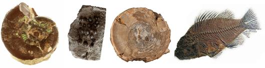 l'étude des fossiles